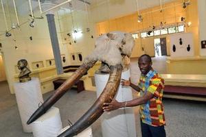 Personnel travaillant dans les musées et institutions assimilées de 2003 à 2006