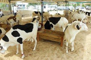 Production nationale des produits d'élevage de 2003 à 2012